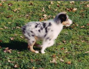 Boo running cropped